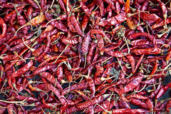 Red chili pepper Royalty Free Stock Photos