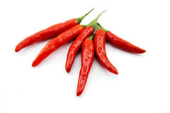 Red chili pepper Stock Image