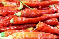 Red chili pepper closeup Stock Photos