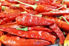 Red chili pepper closeup Stock Image