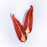 Red chili pepper cut in two, top view,white background. Royalty Free Stock Images