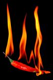 Red chili pepper on fire. Red hot chili pepper on fire, isolated on black background stock photo
