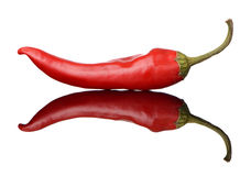 Red chili pepper with full reflection Royalty Free Stock Photography
