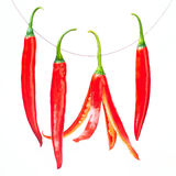 Red chili pepper isolated on a white background Royalty Free Stock Photos