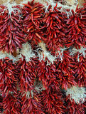 Red Chili Pepper Strands. Strands of Red Chili Peppers in New Mexico Royalty Free Stock Photography