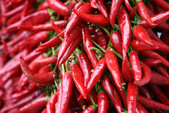 Red chili pepper strings Stock Images