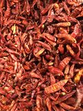 Red hot chili peppers. Red chili pepper from  thailand Stock Images