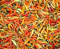Red chili pepper wallpaper. Market in Indonesia royalty free stock photos
