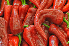 Red chili peppers. As background royalty free stock photography