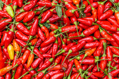 Red chili peppers as a background Royalty Free Stock Images