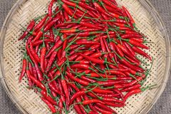 Red chili peppers on bamboo weave Royalty Free Stock Photo