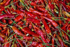 Red Chili Peppers, a beautiful spicy food stock photography