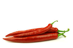 Red chili peppers (Capsicum) Royalty Free Stock Image