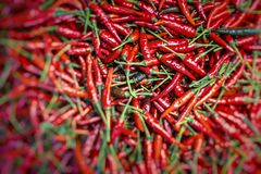 Red chili peppers, closeup view Royalty Free Stock Image