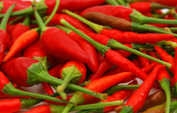 Red chili peppers Royalty Free Stock Photo