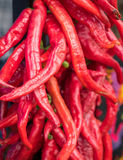 Red chili peppers closeup view. Stock Image