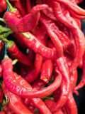 Red chili peppers closeup view. Royalty Free Stock Image