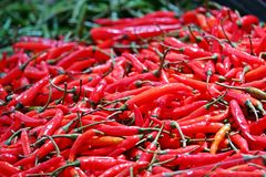 Red chili peppers, closeup view stock photography