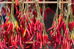 Red chili peppers drying on rack. Red chili peppers drying in the sun on wooden racks Royalty Free Stock Images