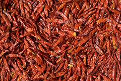 Red Chili Peppers Drying in the Sun Royalty Free Stock Photos