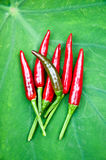 Red chili peppers in green background Royalty Free Stock Photography