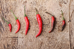 Red Chili Peppers grow up on wooden background Royalty Free Stock Images
