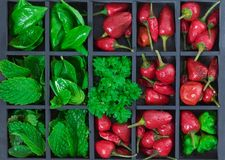 Red chili peppers and herbs Royalty Free Stock Photos