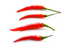 Red chili peppers isolated Royalty Free Stock Photography
