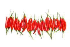 Red chili peppers isolated Stock Images