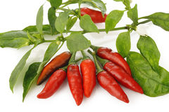 Red chili peppers and leaves on white Royalty Free Stock Images
