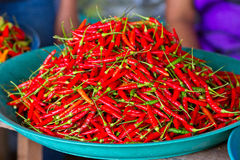 Red chili peppers for sale on the market Royalty Free Stock Photos