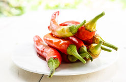 Red chili. Peppers served on a plate Stock Image