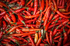 Red chili peppers. Stock Image
