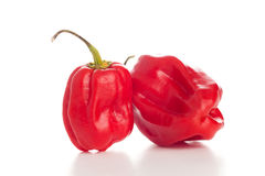 Red chili peppers on the white background. Two red chili peppers on the white background Royalty Free Stock Image