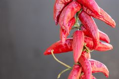 Red chilies background, Selective focus on the right side stock photo