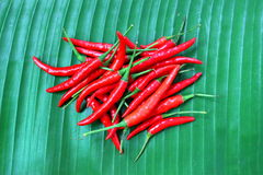 Red chilies Royalty Free Stock Photos