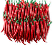 Red chilis Stock Images