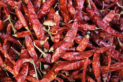 Red Chilis. Dried red Indian Chilis from a market Royalty Free Stock Photography
