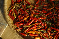 Red chilis dry royalty free stock photo
