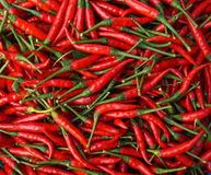 Red chill pepper Royalty Free Stock Image