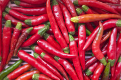 Red chilli. Close up of red chilli in basket Royalty Free Stock Photo
