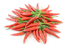 Red chilli. Stack of red chilli isolated on white background royalty free stock photos
