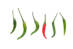 Red chilli amongst Green chillies Stock Images