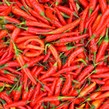 red chilli background Stock Photos