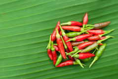 Red chilli on banana leaf. Group of red chilli on banana leaf Stock Photo