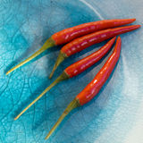 Red chilli on blue plate Royalty Free Stock Image