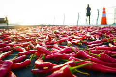 Red Chilli Royalty Free Stock Images
