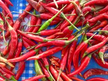 Red chilli Royalty Free Stock Image
