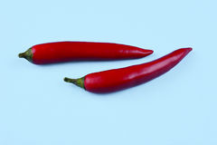 Red chilli papper on blue background. Stock Photos