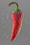 Red chilli pepper with bubbles Stock Photography